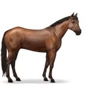 Horse Symbol