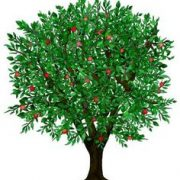Fruitful Tree